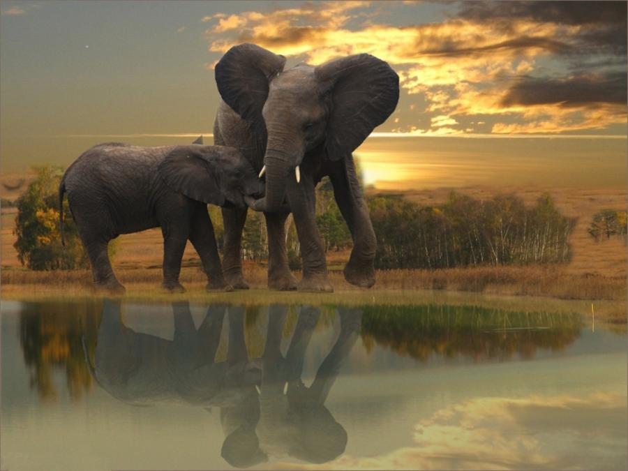 elephants In The bush animals elephant landscape
