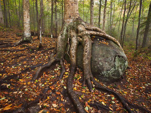 birch boulder adirondacks 38221 600x450