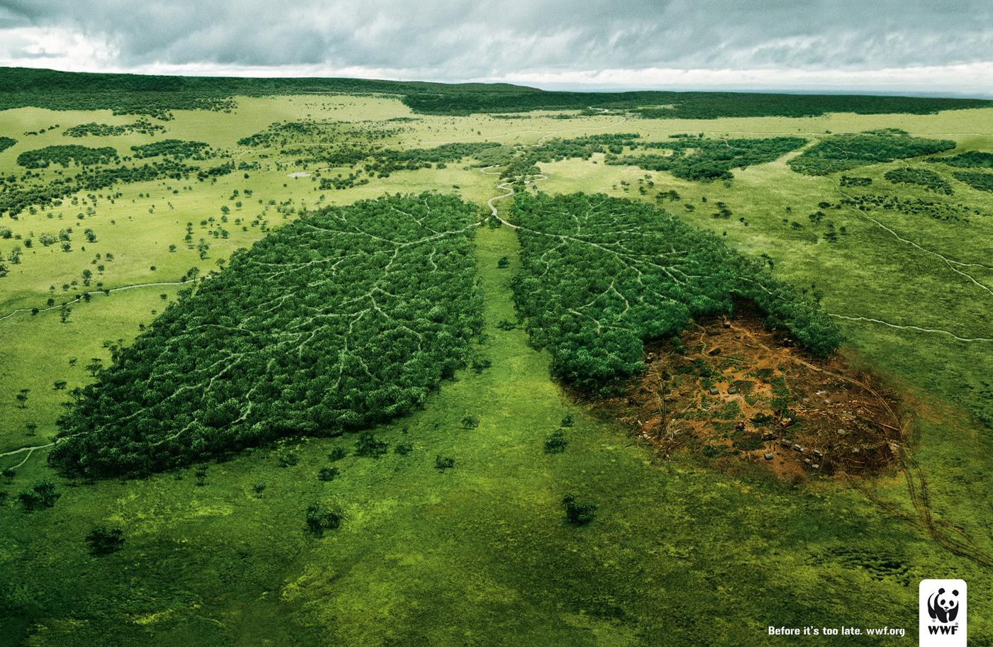 Creative Ads WWF