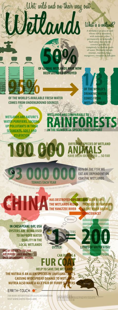 World Wet Lands Infographic